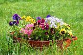 stock photo of wash-basin  - ideas for garden  - JPG
