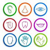 stock photo of flat-foot  - set of colored icons with flat parts of the human body ear nose eyes tongue teeth mouth lips head arm leg foot - JPG