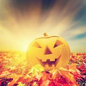 stock photo of jack-o-lantern  - Halloween pumpkin in fall - JPG
