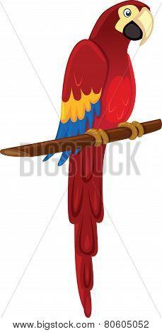Parrot or macaw