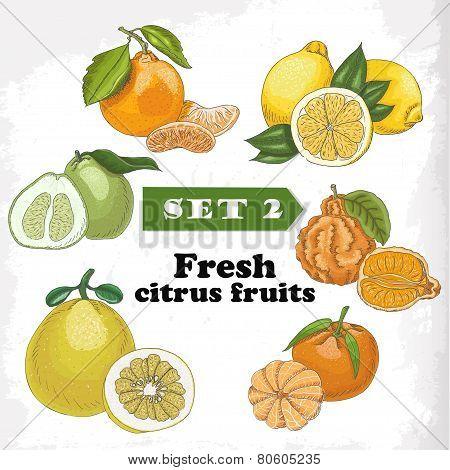 Set of Fresh Citrus Fruits Of Lemon, Mineola, Clementine, Pomelo, Bergamot And Mandarin