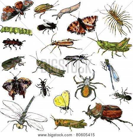 set of watercolor drawing insects