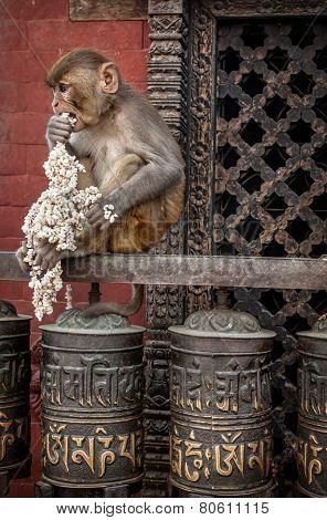 Monkey On Prayer Wheels In Nepal
