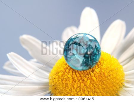 The earth on a daisy