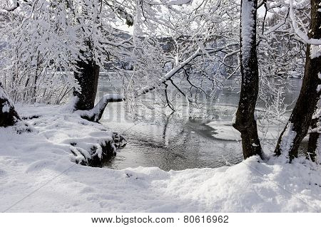 Winter Lake Below The Snow-clad Trees