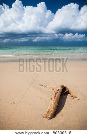 Beach driftwood and dark blue sky