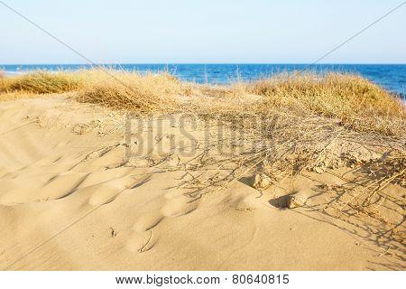 Sand Dunes at the Mediterranean sea