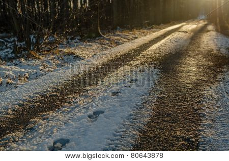 Footprints In The Snow On A Forest Path