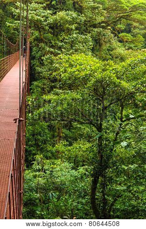 Suspension Bridge, Monteverde Resere, Costa Rica