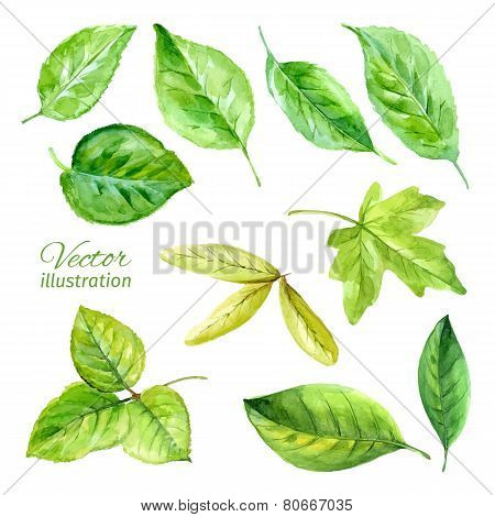 Set of spring leaves watercolor. Vector