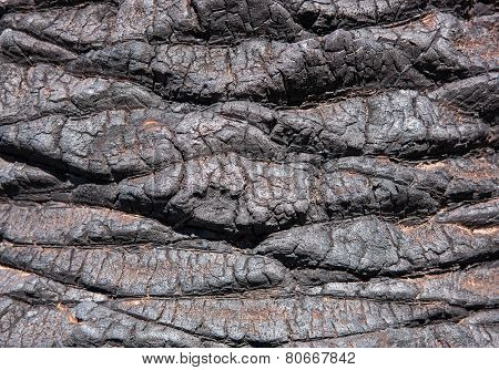 Detail of a burnt palm trunk