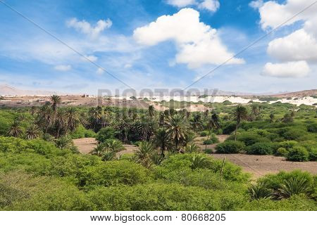 Oasis Near  Viana Desert, Boavista - Cape Verde