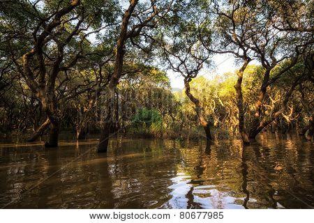 Tonle Sap Mangrove Forest