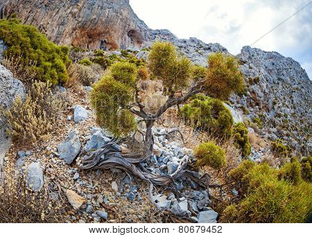 Vegetation on rocky slope in mountains