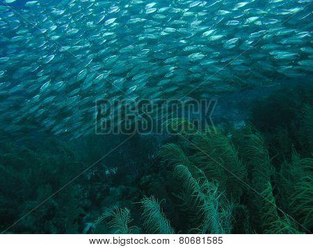 Ball of swirling ocean bait fish