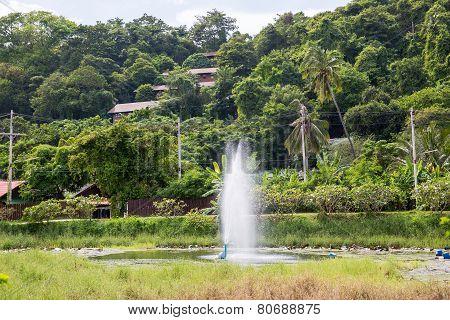 Maya Bay In Jungle, Phi Phi Leh Island, Thailand