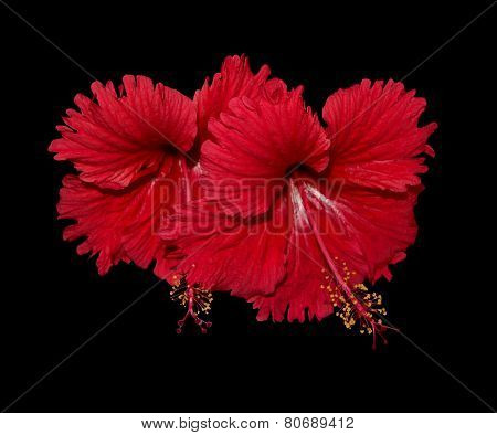Red Hibiscus Arrangement