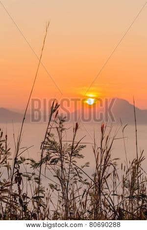 Flower In Background Warm Sunrise With Smog Sea