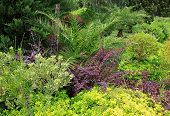 pic of tropical plants  - Variety of plants in a tropical garden - JPG