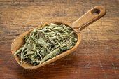 foto of substitutes  - stevia dried leaves in a rustic wooden scoop - JPG