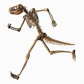 image of dinosaur skeleton  - Digital 3D Illustration of a Chimeric Skeleton - JPG