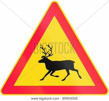 Moose Crossing In Finland