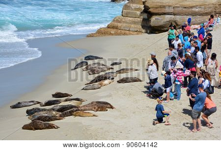 Tourist watch seals