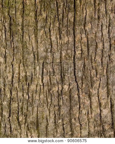 Closed Up Of  Vertical Texture Of The Plank Wood
