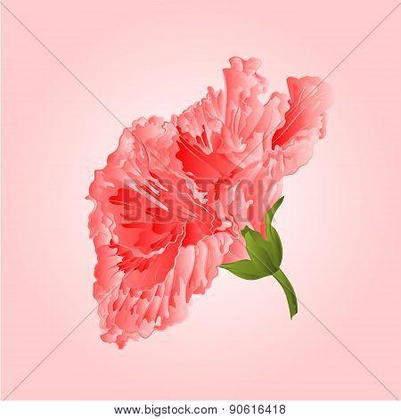 Hibiscus Pink Tropical Flowers Vector