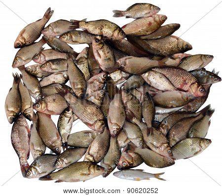 Bunch Of Fresh Fish