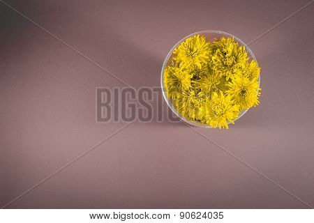 Yellow Dandelion Flowers In A Circle