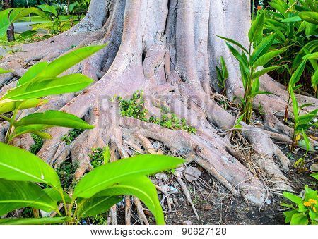 Sprawling Tree Roots