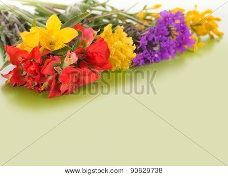 Colorful spring wildflowers on gradient green background with copy space