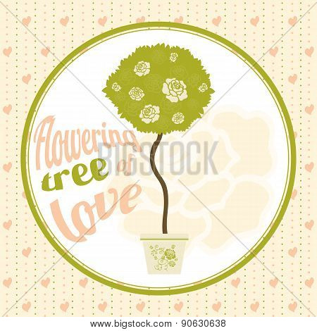 Flowering Tree Of Love In The Pot. Spherical Crown Of The Tree With Blossoming Flowers Roses.