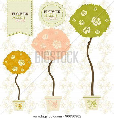 Blooming Rose Flowers Crowns Of Ornamental Trees.