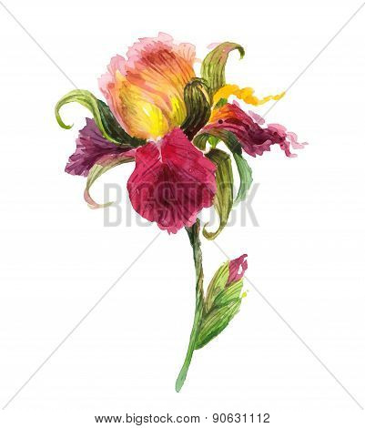 Beautiful watercolor iris flower