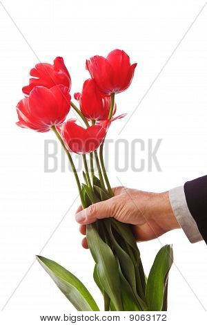 Giving Tulips