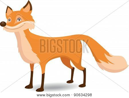 Fox - Illustration
