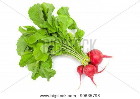 Red Radish Bunch