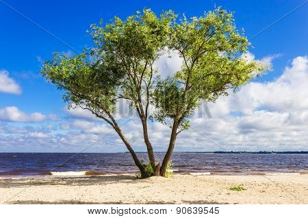 Tree On The Shore Of The Reservoir