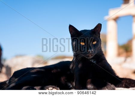 Dignified Black Cat