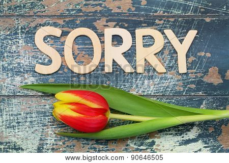 Sorry written with wooden letters on rustic blue surface and tulip