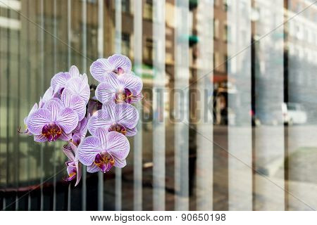 City Reflected In The Window With Flowers And Shutters