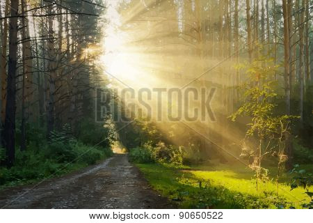 sunrise in the foggy forest, vector