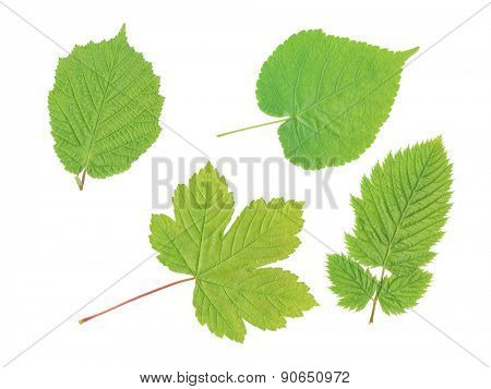 An image of four green leaf isolated on a white background