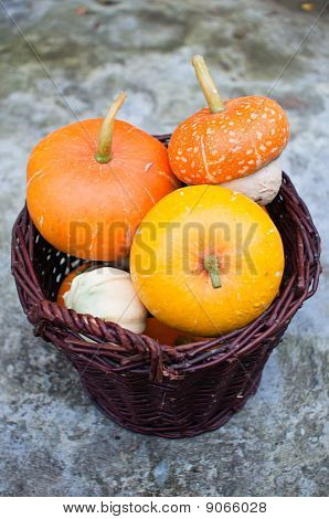 Wicker Basket Full Of Decorative Pumpkins (cucurbita Pepo)