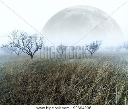 Full moon scenary
