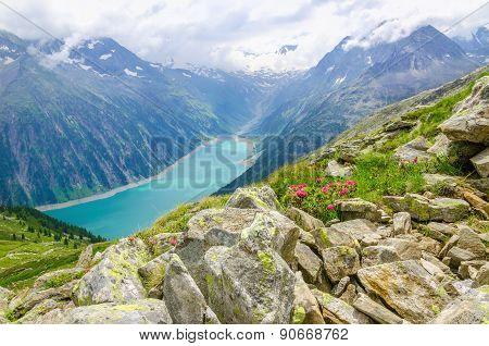 Beautiful alpine landscape with flowers, Austria