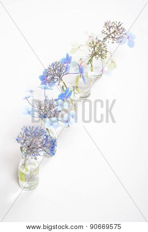 Five Glass Bottles With Blue Blossoms
