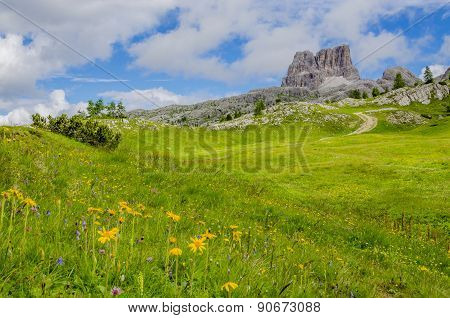 Yellow flowers  Dolomites Mountains, Italy